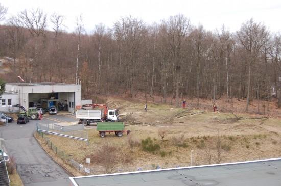 Anfang März wurden im Bereich des ADAC-Luftrettungszentrums einige Bäume gefällt