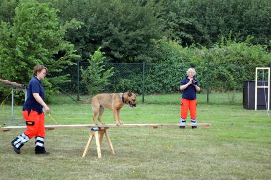 Hund und Hundeführerin der ASB-Rettungshundestaffel zeigten ihr Können