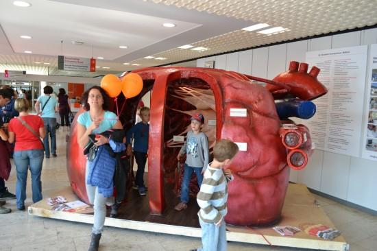 Im Klinikgebäude gab es eine sehenswerte Ausstellung zum Herzen zu sehen
